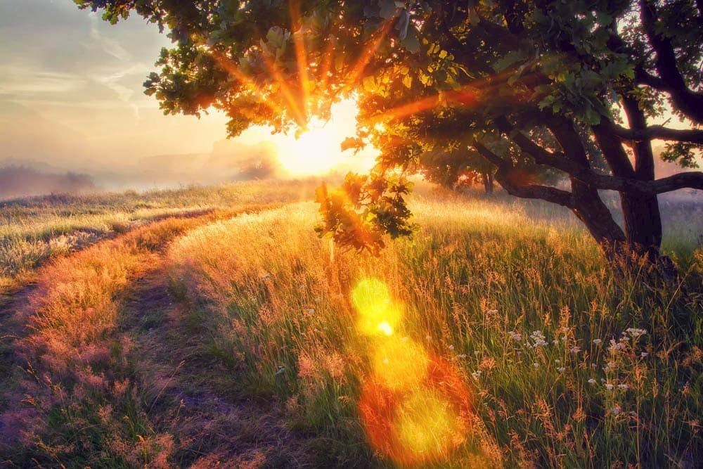 orange sunlight over field